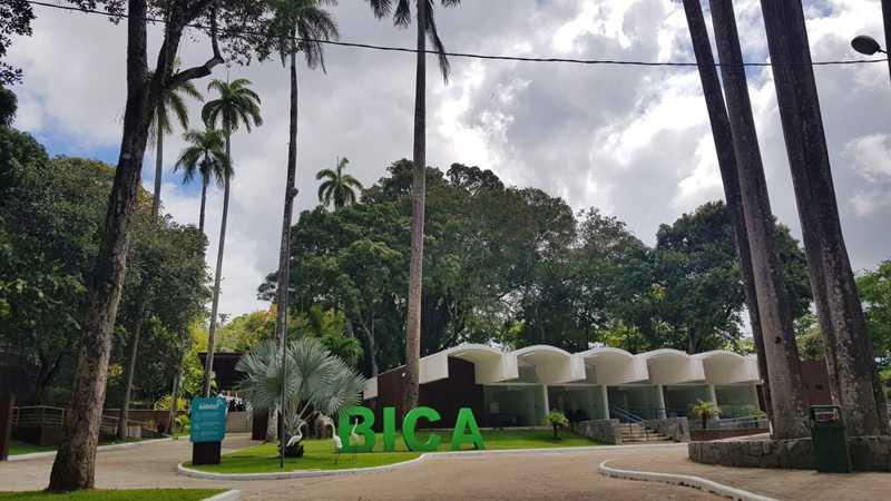 Laudo aponta que felinos sofrem maus-tratos no Parque da Bica, em João Pessoa