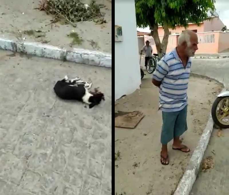 COVARDIA: homem assume ter espancado cachorro até a morte em Montadas, PB