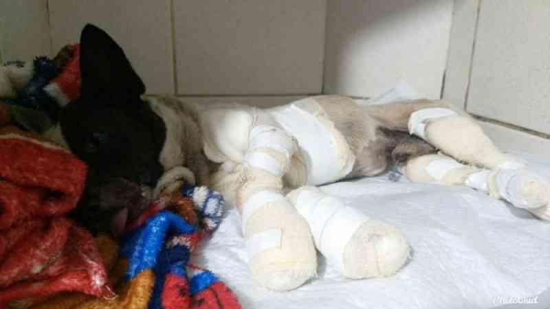 Idoso é preso suspeito de amarrar e arrastar cachorro em caminhonete em Campo Mourão, PR