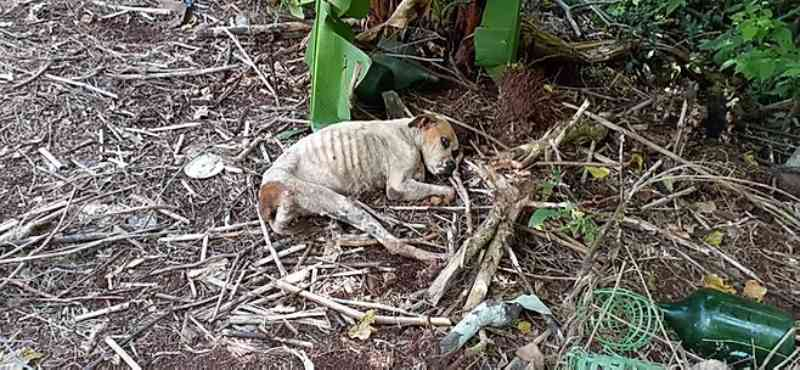 Polícia Civil de Capanema (PR) resgata animal com maus-tratos e pede ajuda para custear tratamento