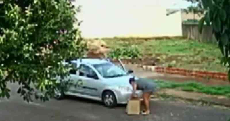 Mulher é filmada abandonando cachorra em Maringá (PR), diz polícia; VÍDEO