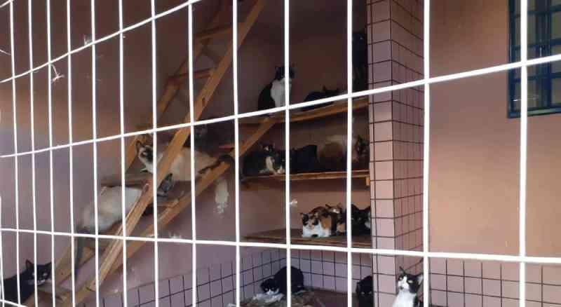 380 gatos são encontrados em situação de maus-tratos em Ponta Grossa (PR), diz polícia