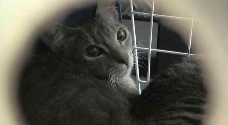 Voluntários criam grupo para cuidar de gatos encontrados em situação de maus-tratos, em Ponta Grossa, PR