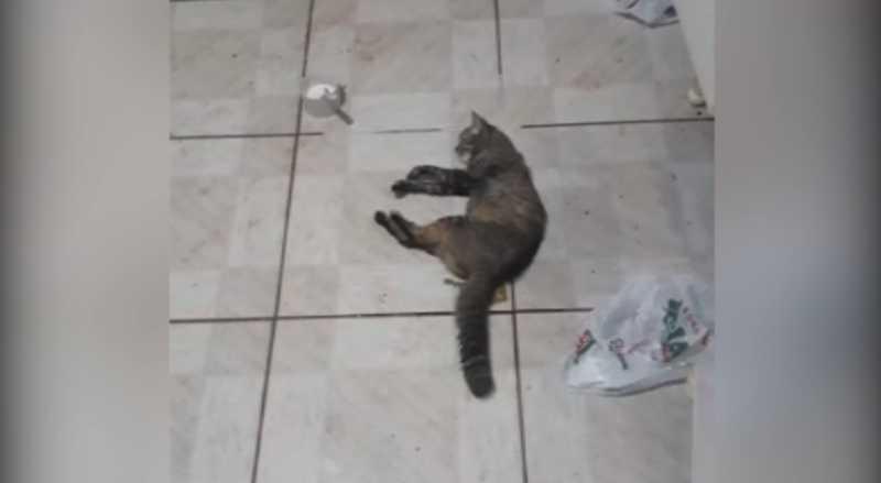 Moradores relatam casos de envenenamento de gatos na região do Tarumã, em Cascavel, PR