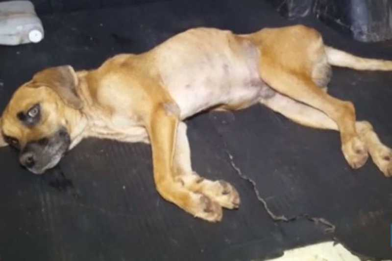 Cachorro vítima de suposto estupro é resgatado em bairro de Cascavel, PR
