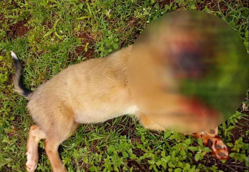 Cão é atropelado e moradora reclama de motorista que não socorreu animal