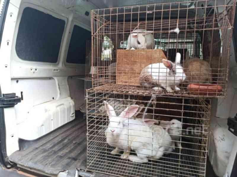 Mais de 50 animais em situação de maus-tratos são recolhidos em chácara de Marechal Rondon, PR