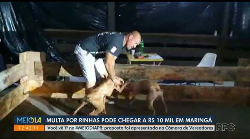 Proposta prevê punição de R$ 10 mil por animal a pessoa que utilizar animais em rinhas, em Maringá, PR