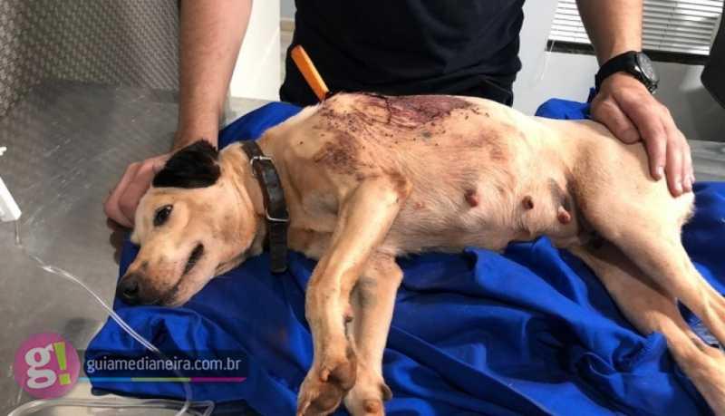 Casal resgata cachorrinha que foi esfaqueada durante a madrugada em Medianeira, PR