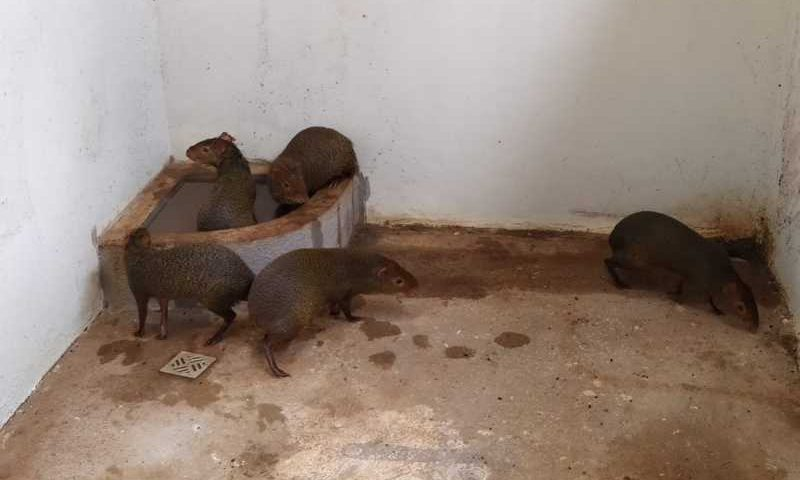 Animais eram mantidos em cativeiro em Toledo, na região oeste do Paraná — Foto: Divulgação/Polícia Ambiental