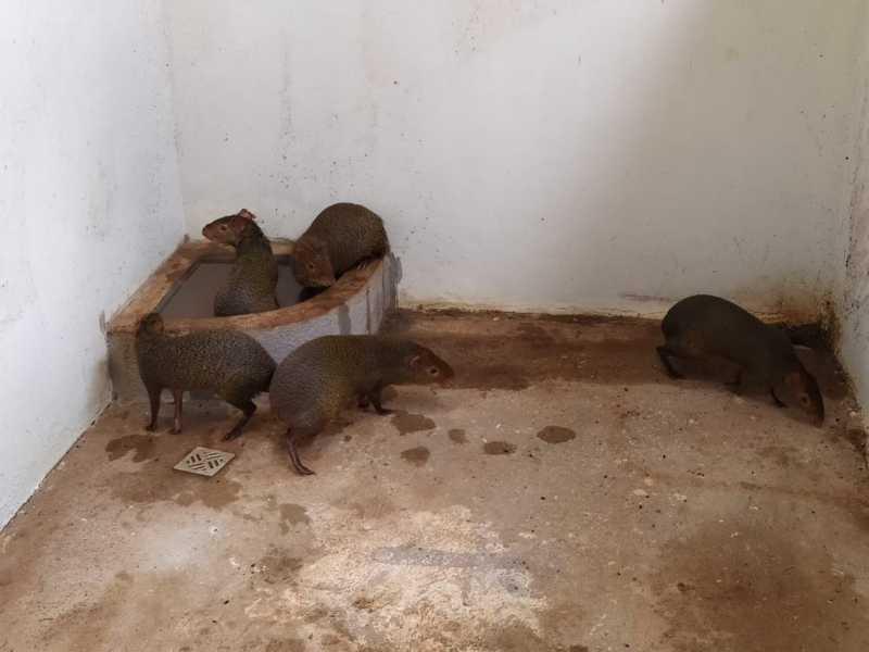 Morador é multado em R$ 37,5 mil por manter animais silvestres em cativeiro em Toledo, PR