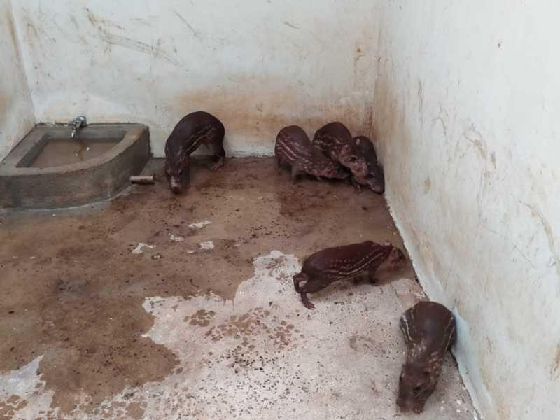 Animais apreendidos foram encaminhados para o Zoológico de Cascavel — Foto: Divulgação/Polícia Ambiental