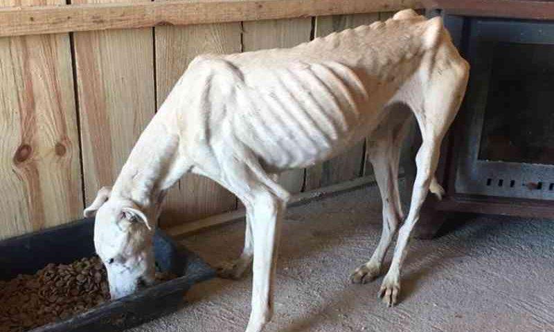 Associação diz que toureiro João Moura maltrata cães 'há muitos anos'