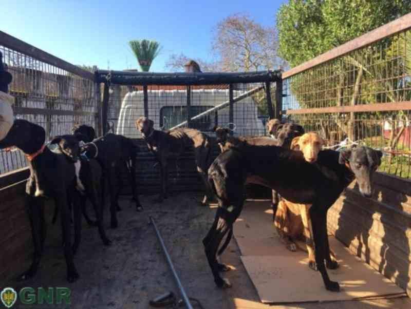 Petição pede condenação do toureiro João Moura por maus-tratos a 18 cães