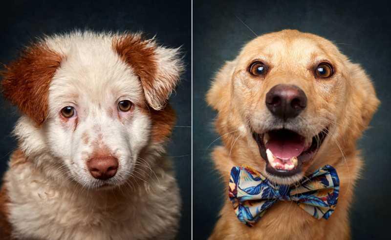 João retrata cães para lhes arranjar uma nova casa