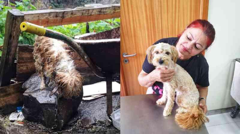 A incrível transformação de uma cadela resgatada pela 'Ajuda a Alimentar Cães'; fotos