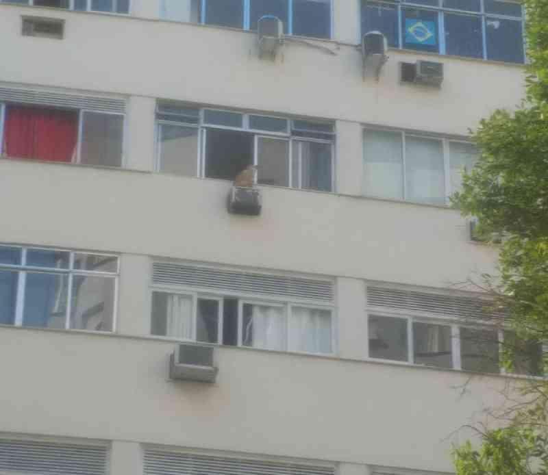 Cachorro é resgatado por guardas municipais após ser visto em janela do 7° andar de prédio em Copacabana