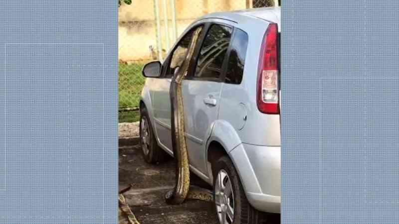 Ameaçados por cobras, gatos que vivem próximo a hospital no Rio serão recolhidos pela prefeitura