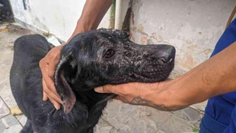 Cinco cães debilitados são resgatados em ambiente insalubre no bairro Piedade, na Zona Norte do Rio
