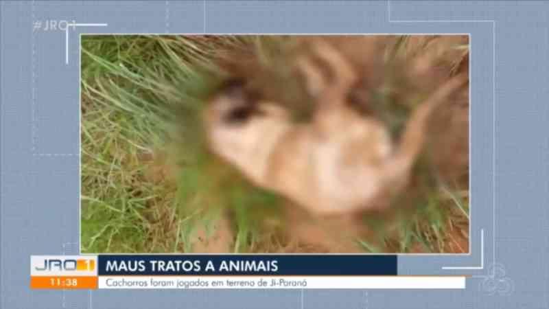 Restos mortais de cachorros são achados em estrada rural de Ji-Paraná, RO