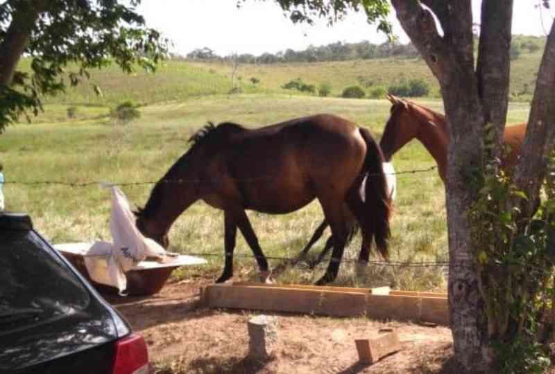 Cavalos são sequestrados do canil municipal de Camaquã, RS