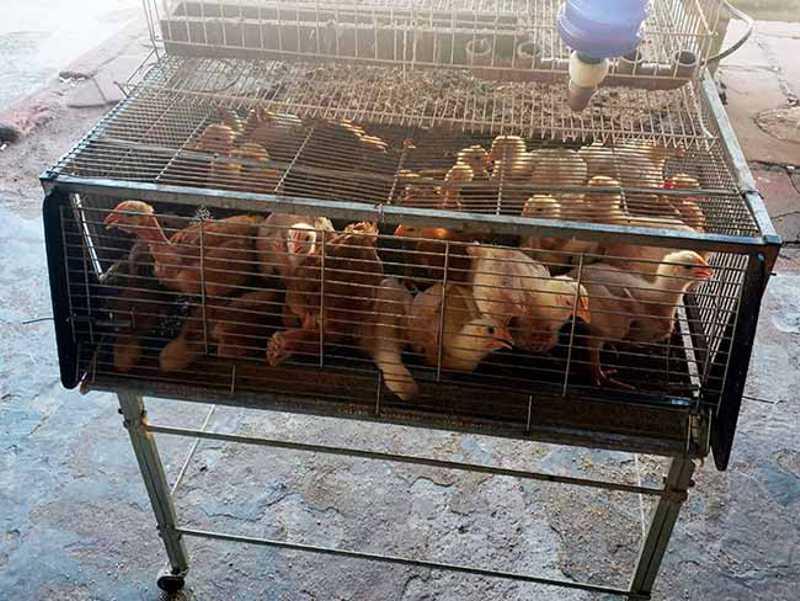 Dono de agropecuária é preso por maus-tratos a animais em São Leopoldo, RS
