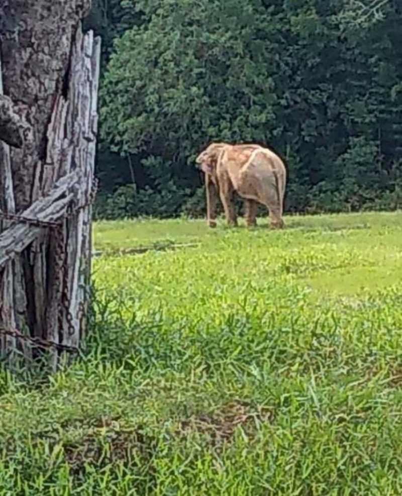 Elefanta 'Pink' morre no Zoo de Sapucaia do Sul, RS