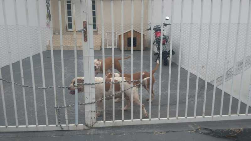 Guarda Municipal recolhe cão que atacou e descobre maus-tratos, em Balneário Comboriú, SC
