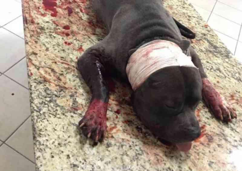 Mais um cachorro é baleado pela PM; polícia diz que pit bull atacou