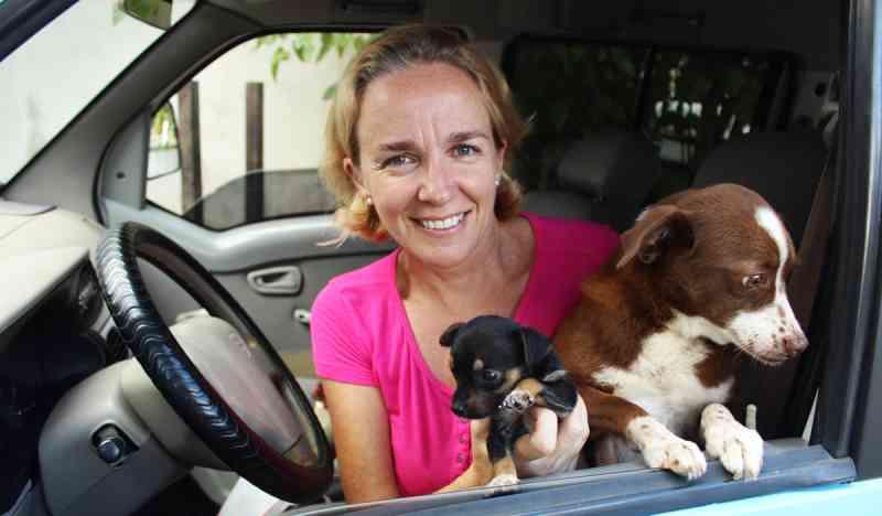 Proteção animal: voluntária realiza sonho de adquirir van em Jaraguá do Sul, SC