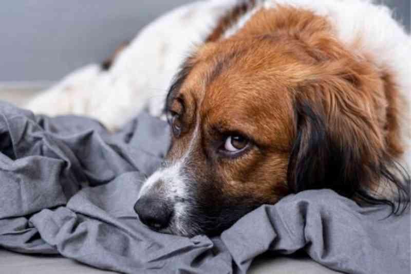 Homem sofre condenação por agredir cadela com cano de PVC
