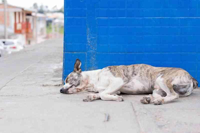 Mafra (SC) é condenada a adotar políticas públicas para controle de animais abandonados