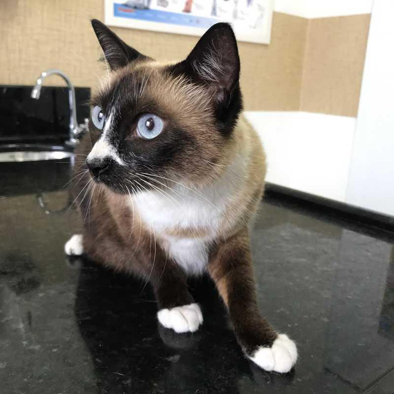 Apelidada de Mia, gatinha resgatada é considerada 'extremamente calma e querida' pela Acapra. (Foto: Acapra Brusque / Divulgação)