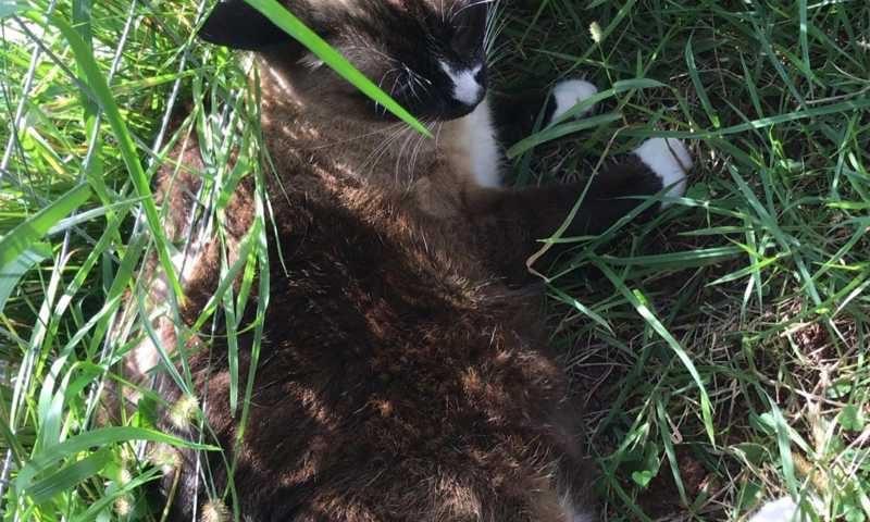 Após denúncia, a gatinha foi localizada e resgatada. (Foto: Divulgação / Acapra Brusque)