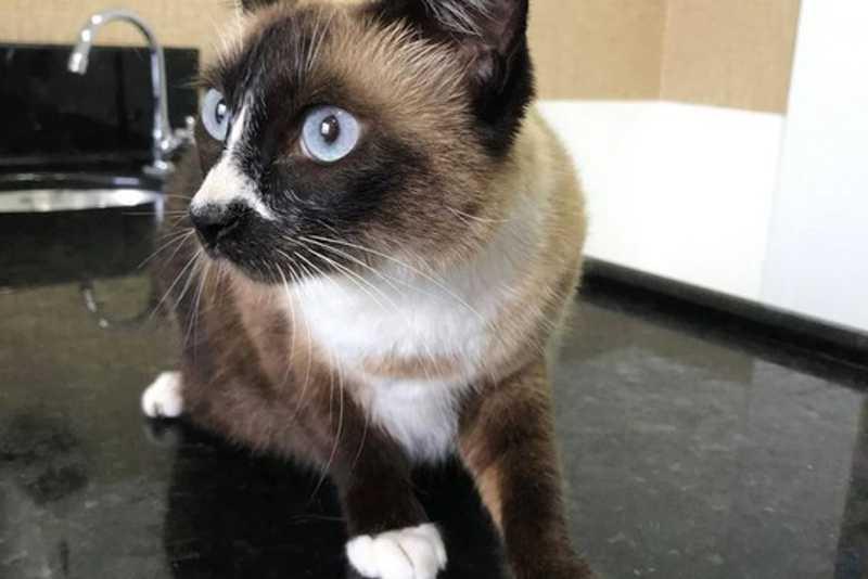ONG divulga nota sobre gata que sofreu maus-tratos em Brusque, SC; tutor quer animal de volta
