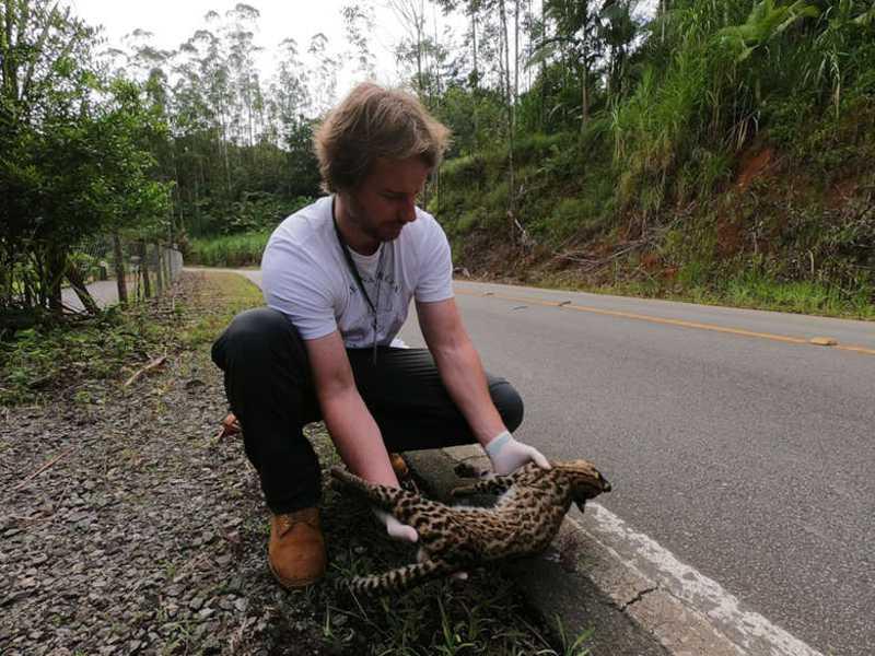 Fujama resgatou 34 animais silvestres em menos de um mês em Jaraguá do Sul, SC