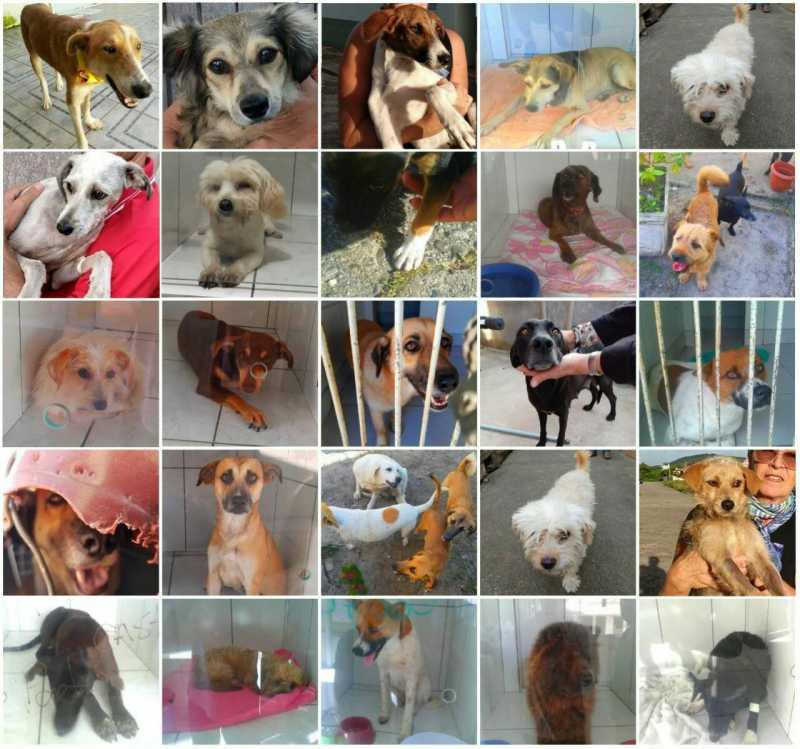 Mais de 530 animais já foram castrados gratuitamente em Laguna, SC