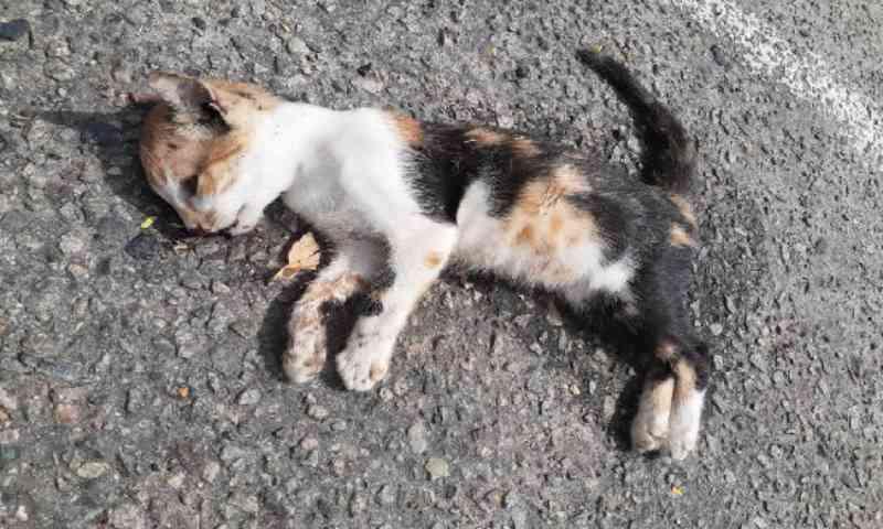 Integrantes de ONG prestam depoimentos sobre mortes de gatos em parque de Aracaju
