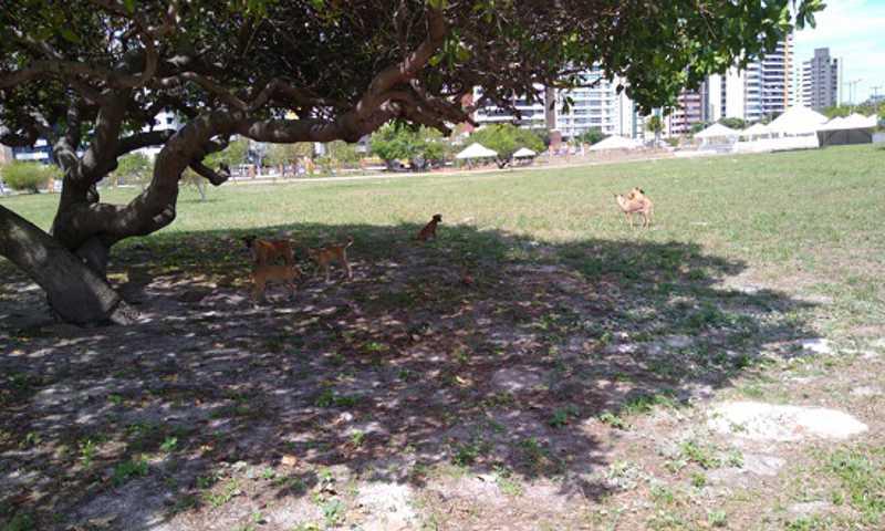 Os cachorros foram avistados essa semana no parque (Foto: Projeto Manjedoura)