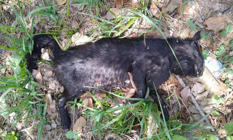 Gatos mortos no Parque da Sementeira (Foto: Grupo Manjedoura)