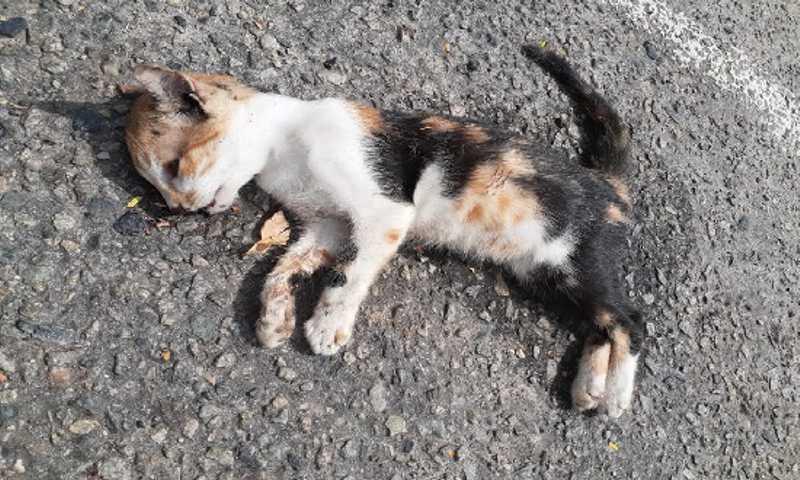 Mais de 15 gatos foram mortos entre quinta e sexta-feira, 7, no Parque da Sementeira (Foto: Projeto Manjedoura)