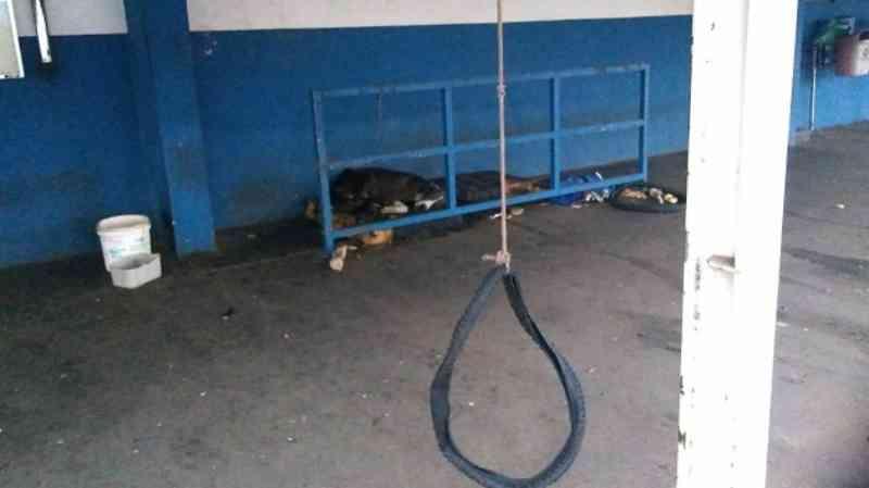 Denúncia aponta que cães estão abandonados em empresa fechada de Americana, SP