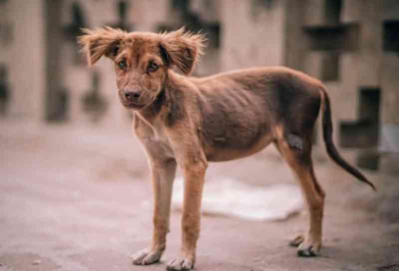 Políticas para animais não são cumpridas em Araraquara (SP), diz proteção