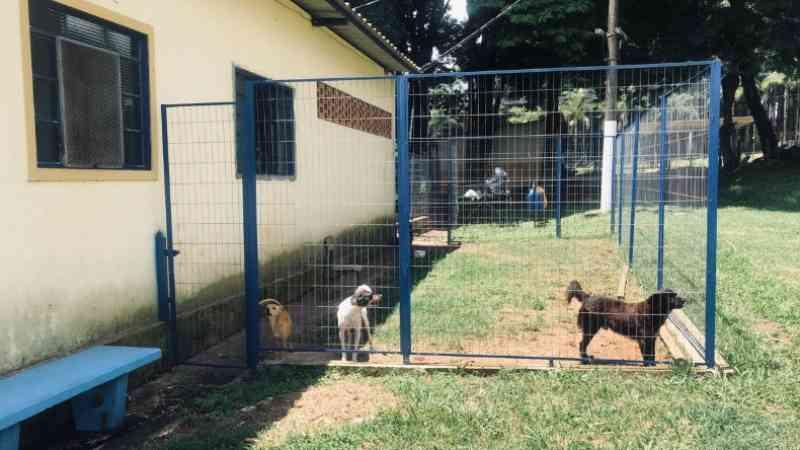 Procedimentos crescem 101% no Centro de Zoonoses de Ibaté, SP