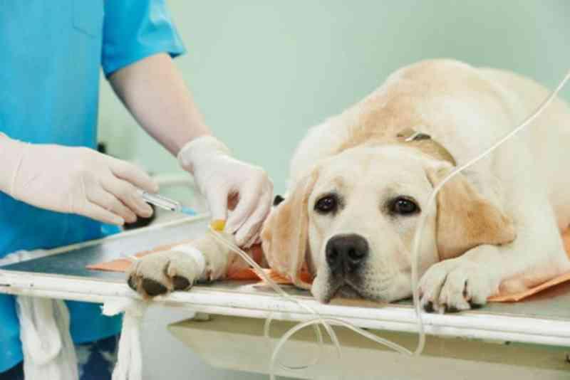 Ilha Comprida (SP) inicia campanha de castração e chipagem de cães e gatos