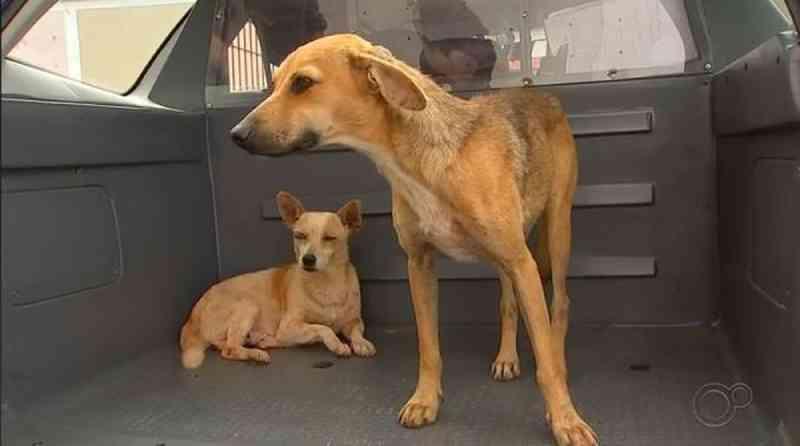 Cães são resgatados após denúncia de maus-tratos em Itapetininga, SP