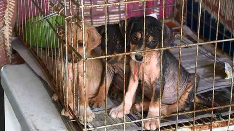 Centro de Zoonoses de Itu (SP) incentiva a adoção de animais abandonados