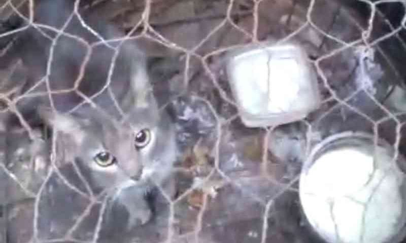 Gato mantido preso em gaiola é resgatado em bairro de São José do Rio Preto, SP