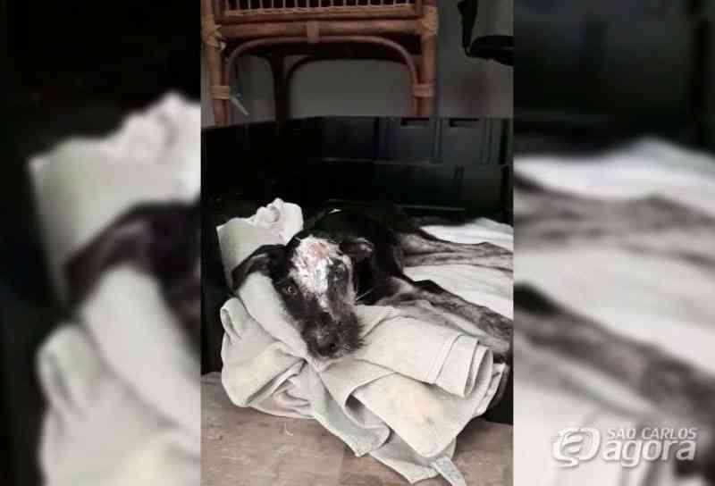 Cachorro arrastado por carro é 'filho caçula' de nova família em São Carlos, SP