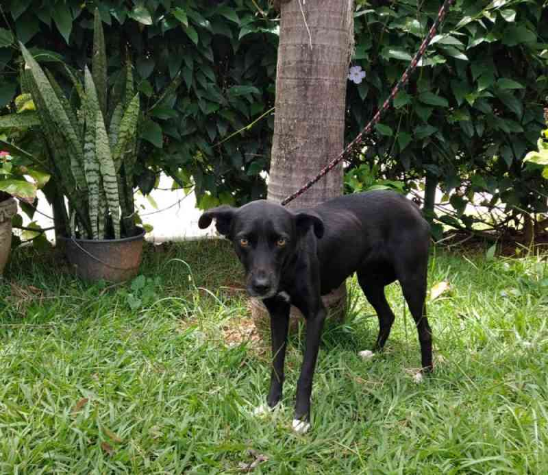 Cães são resgatados de casa abandonada em Sorocaba, SP